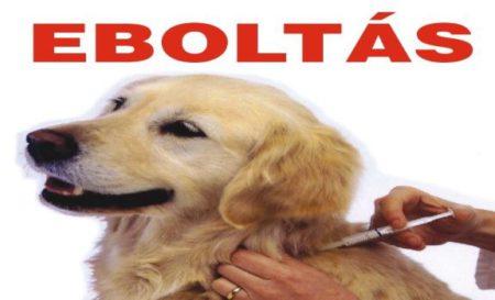 Eboltás 2020. 03. 19.